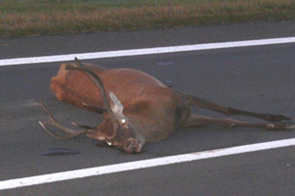 Zviera skončilo neďaleko odbočky na Stožok.