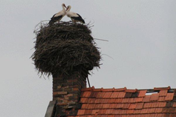 Bocianie hniezdo na komíne.