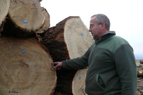 Jaroslav Kontriš pri dreve pripravenom na dražbu.