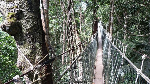 Malajzia. Taman Negara