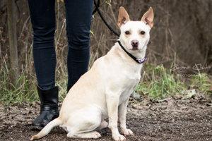 Asi trojročný kríženec Body je aktívny psík, ktorý môže byť na dvore s vlastnou búdou, potrebuje ale vysoký plot, pretože vie vysoko skákať. Povahovo je milý, s inými psíkmi sa znáša individuálne. Je očkovaný, odčervený, čipovaný.