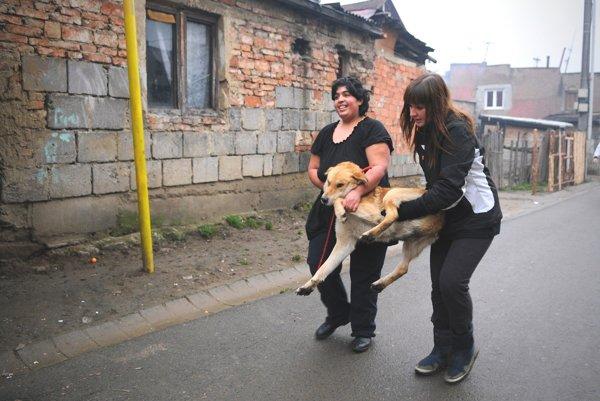 Diana Truchlíková (vpravo) pri odbere psa určeného na kastráciu v rómskej osade v Krížovej Vsi v roku 2012.