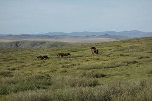 Sto kilometrov k mongolskému kláštoru
