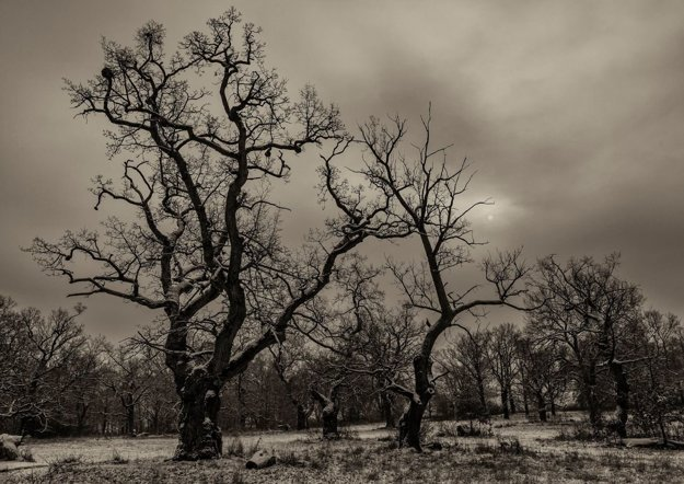 Gavurky predstavujú zvyšok pôvodných dubových pasienkov, ktoré z nášho územia už takmer vymizli v dôsledku postupných zmien v poľnohospodárskej činnosti.