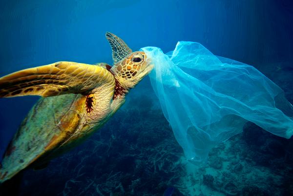 Korytnačky si plávajúci plast môžu pomýliť s potravou.