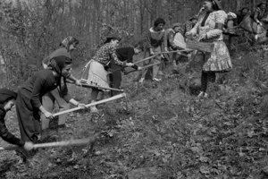 Na archívnej snímke z 9. apríla 1962 mesiac lesov na Modrom Kameni začali zalesňovaním. V južných oblastiach Stredoslovenského kraja, ktorý je najlesnatejším v našej republike, sa začal tohtoročný Mesiac lesov nástupom lesníkov na zalesňovacie práce. Prvé sadeničky dali do pôdy v polesiach lesných závodov Lučenec, Modrý Kameň, Šafárikovo a v ďalších. V celom kraji plánujú tohto roku zalesniť viac ako 18 tisíc hektárov lesnej i nelesnej pôdy.