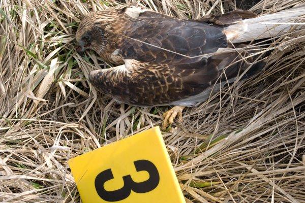 Spoločenskú hodnotu uhynutých dravcov vyčíslili na 6 440 eur.