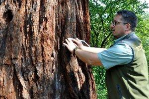 Mestský poslanec Jaroslav Slašťan si myslí, že poškodenie bleskom spred rokov nemôže byť dôvodom na vyradenie stromu z katalógu chránených.