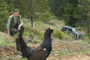 Tetrov hlucháň patrí k ohrozeným druhom vtákov na Slovensku.