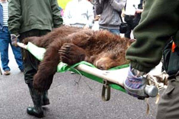 Tohto medveďa odchytili koncom mája na Hrebienku.