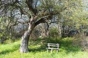 Timravina jabloň