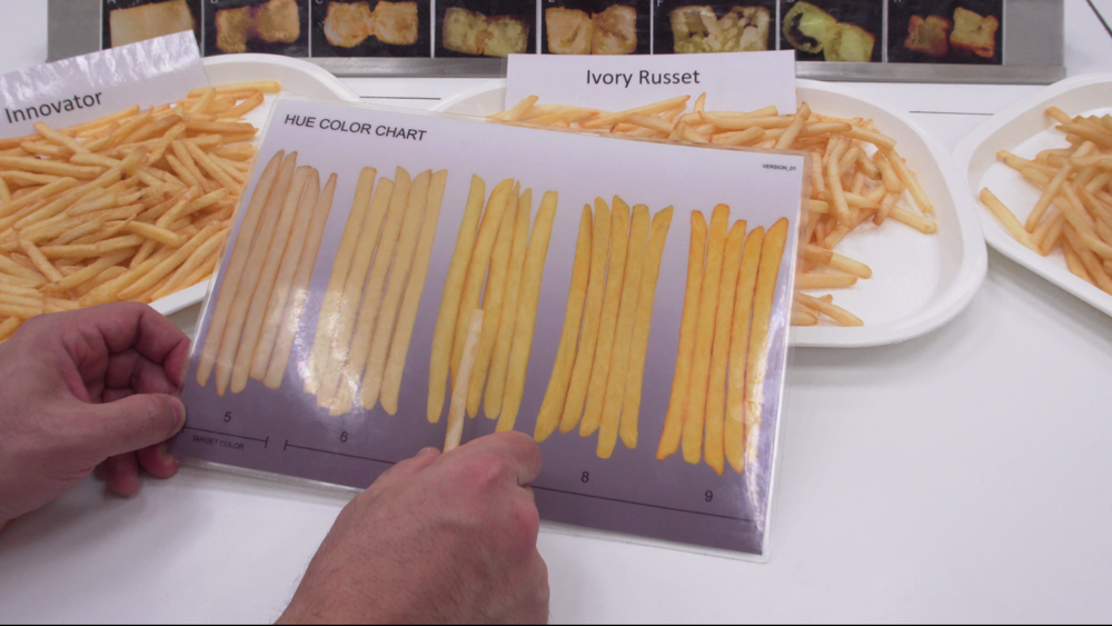 Zamestnanec kontroluje správnu farebnosť hranolky
