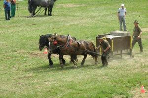 Kone ťahali viac ako dva a pol tonový náklad.