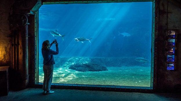 Oceanárium uShaka Marine World sídli v Durbane.