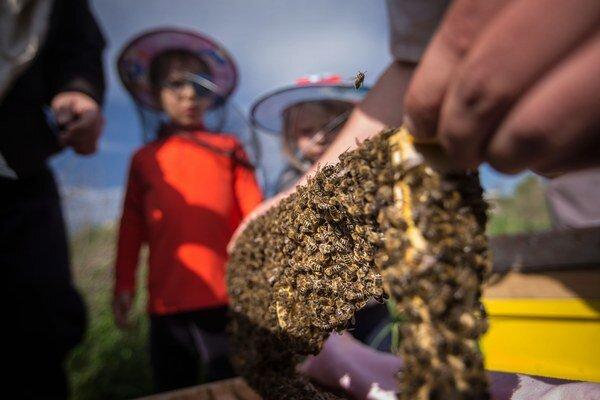 Projekt Adoptuj si včelu pomôže priblížiť prácu včelárov.