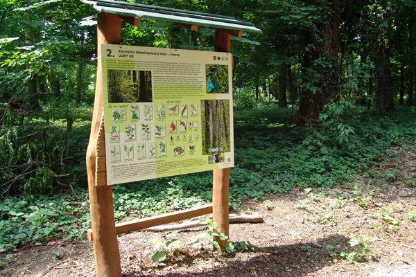 Význam lužného lesa v prírode môžeme prirovnať k významu tropických dažďových pralesov. Jeden z nich ešte prežíva v Kamennom Mlyne.