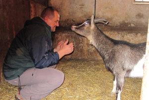 Pavol Duchoň s kozou. Kozička sa zotavuje po ťažkom pôrode.