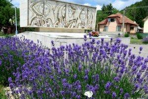 Levandule skrášlili Pamätník SNP vo Valči aaj centrum dediny.