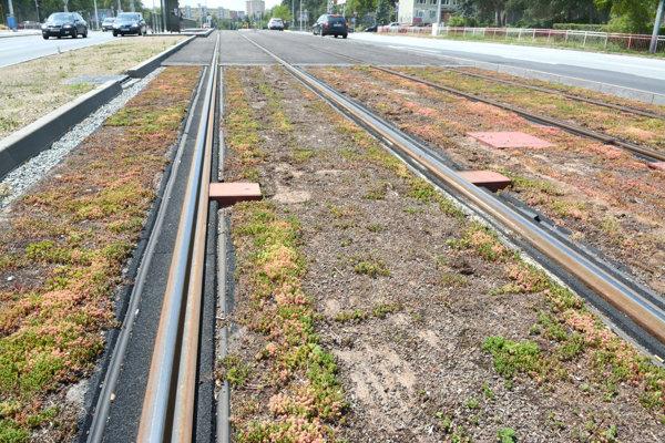Porast na električkovej trati pri novej nemocnici je takmer úplne zničený.