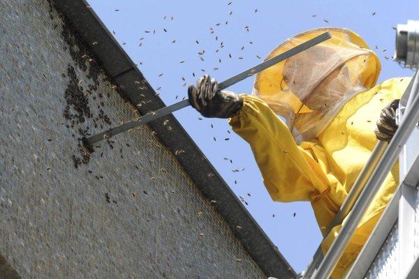 Odchyt bodavého hmyzu. Ilustračné foto.