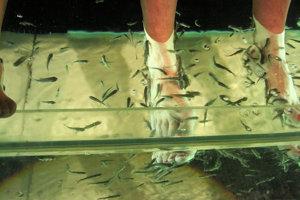Odumretú kožu pojedajú špeciálne rybky.