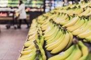 Banány ohrozuje Panamská choroba.