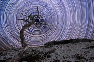 Vetrom šľahaná borievka rastie na Sklanatých vrchoch. V pozadí je hviezdna trasa, ktorá vznikla dlhou uzávierkou. Hviezdy zanechávajú kruhovú stopu, lebo sa točia okolo Polárky, najjasnejšej hviezdy súhvezdia Veľkej Medvedice.
