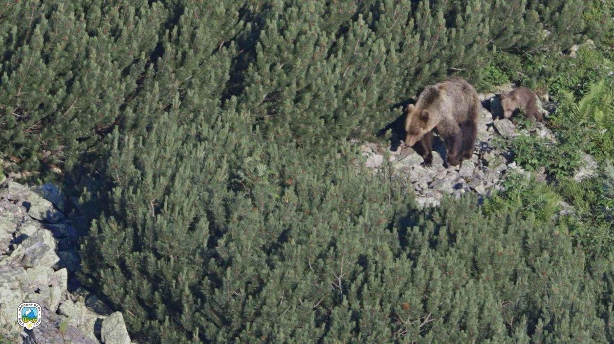be532fac5c Medveďom sa v Malej Fatre darí. Potvrdil to ďalší monitoring - SME ...