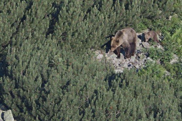 Na muža v zábiedovskom chotári zaútočil medveď.