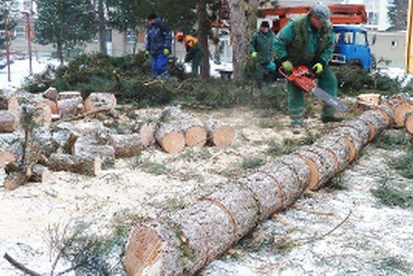 Vysoké borovice tienili bytovke na Lucenkovej ulici.
