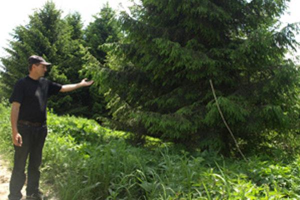 Vendelín Škvarek kontroluje spiľovanie stromov na súkromných pastvinách.