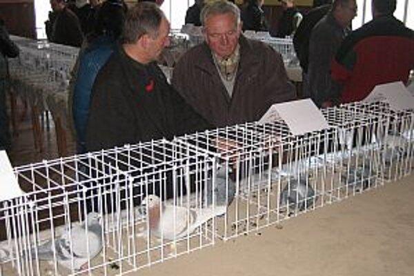 Víťazná kolekcia pútala najväčšiu pozornosť návštevníkov.