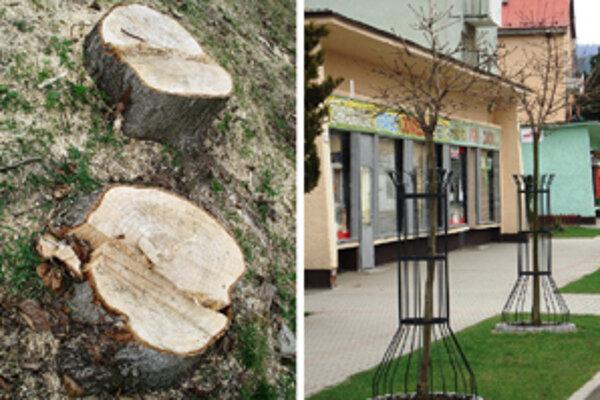 Staré stromy nahradili nové.