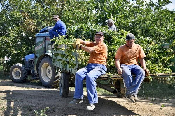 K pestovateľom chmeľu pribudne aj Banskobystrický pivovar