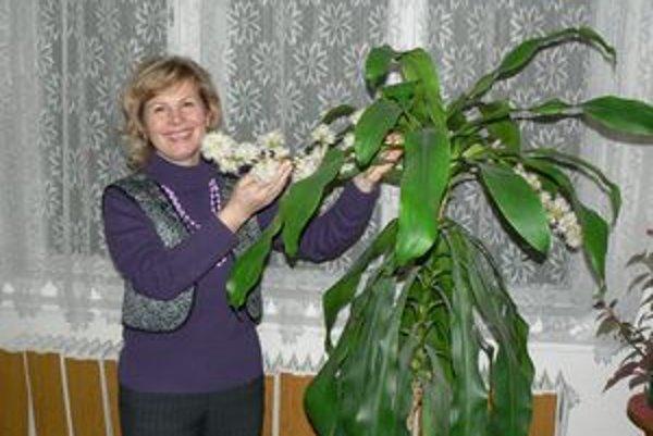 Ľubomíra Bernoláková má vo svojej pracovni raritu. Rastlina yuka, ktorá za normálnych okolností nekvitne, jej zakvitla už po druhý raz.
