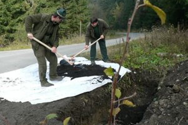 Pracovníci námestovského podniku Štátnych lesov zakopali odchytený podkôrny hmyz v mútňanských lesoch.