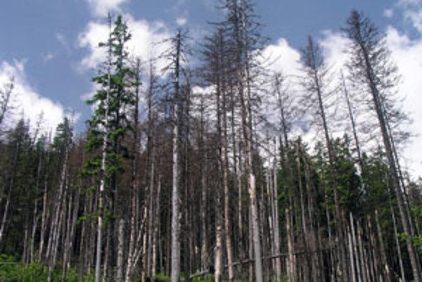 """Lykožrúty požierajú lesy na Orave. Súkromní vlastníci lesov zanedbávajú boj s týmto lesným """"morom"""" najčastejšie."""