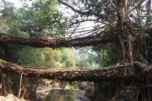 Indická džungľa.