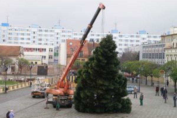 Jedľu postavili na námestí pred týždňom. Predtým rástla na Závodného ulici v Topoľčanoch.