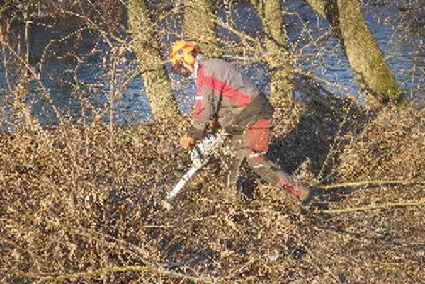Odstraňovanie stromov potrvá do konca marca.