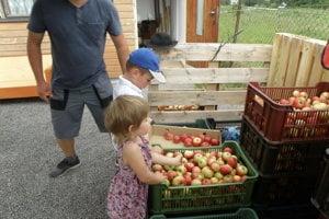 V sade si môžete jablká nazbierať sami alebo si zakúpiť už nazbierané.