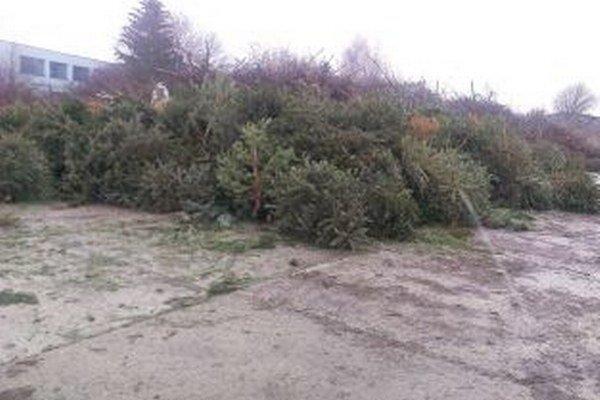 Už sa hromadia. Stromčeky končia v Brantneri.