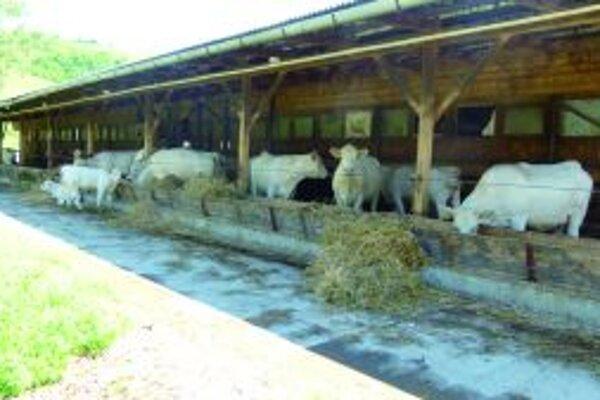 Spracovatelia mlieka ho od družstiev vykupujú za oveľa nižšiu cenu, ako vidíme v obchodoch.