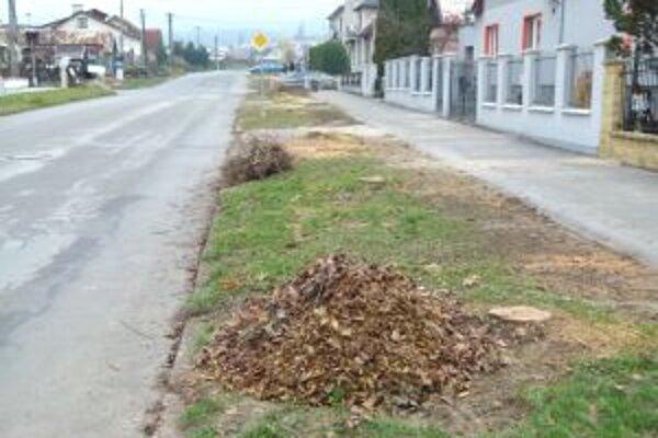 Na ulici Jána Goliána padlo kvôli plynu niekoľko stromov.