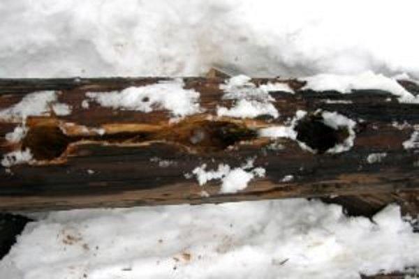 Diery v stĺpe, ktoré ďateľ vyďobal poškodili jeho statiku.