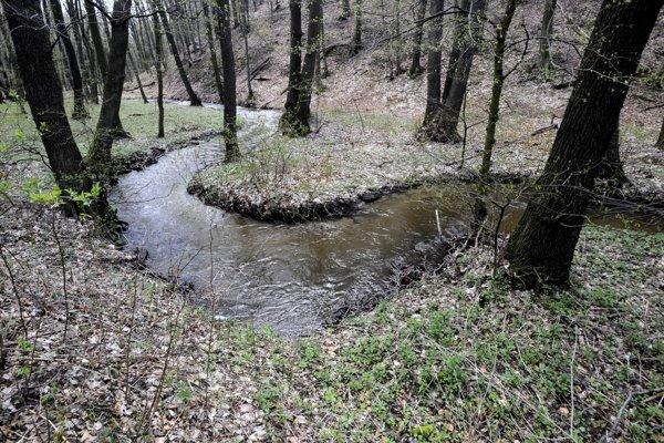 Meandre Vydrice na jej hornom toku v Malých Karpatoch.