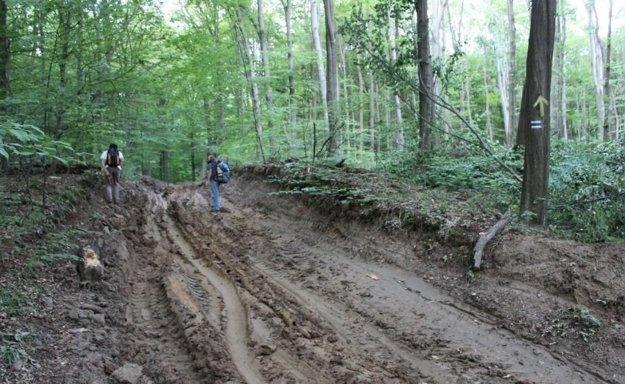 Ochranári chcú v lese nad Račou vyhlásiť rezerváciu bez áut a poľovníkov.