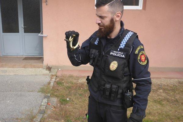 Hada odchytil inšpektor Varga, pre ktorého to nebol prvý takýto zásah.