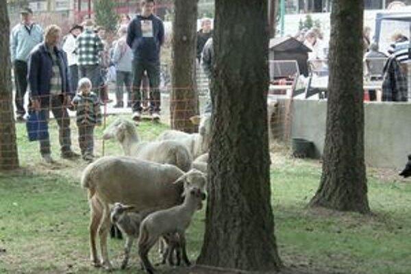 Deti najviac lákali ovečky. V meste ich môžu veru vidieť málokedy.
