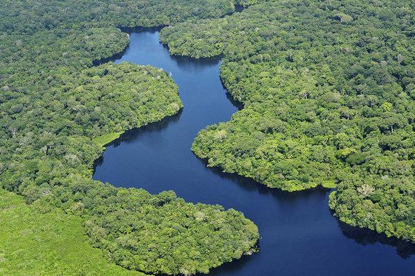 Amazonský prales.
